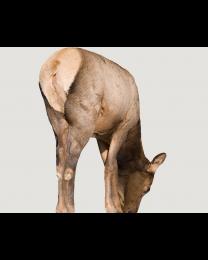 Montana Decoy Miss September Cow Elk Decoy