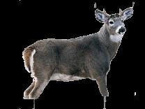 Montana Decoy Whitetail Buck